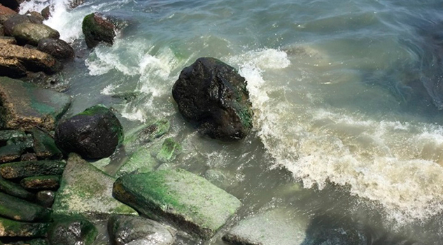 Hallan Investigadores Altos Niveles Contaminación Fecal Mar Veracruz