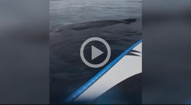 Paddlesurf Deporte Lleno Sorpresas