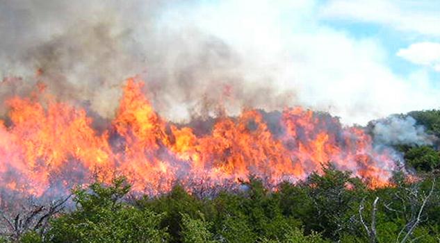 Reporta Conafor Disminución Incendios Forestales Veracruz