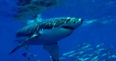 Tiburón Ataca Joven Vacacionista Florida
