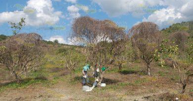 Urgen Créditos Rehabilitar Huertas