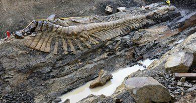 Consejo de Paleontología, primer aniversario de su reactivación