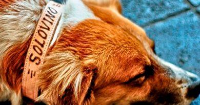 Animalistas Denuncian Redadas Sacrificio Perros Perote