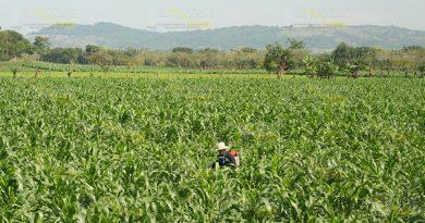 Campesinos A La Espera Numerosos Proyectos