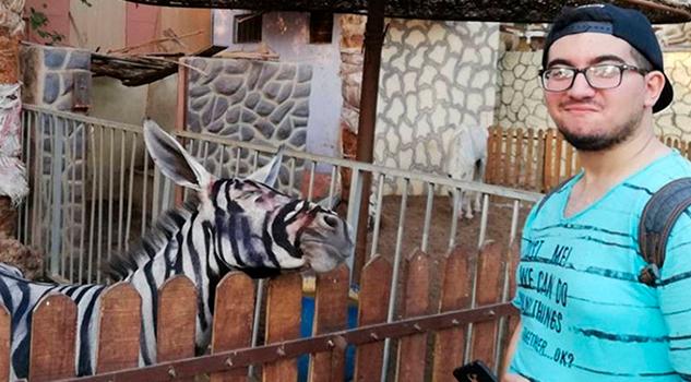 Cebras Burros Pintados Rayas El Último Debate Egipto