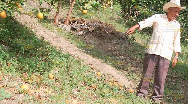 Estragos Agro Por Falta Lluvias Tihuatlán