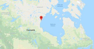 Muere Ataque Oso Polar Proteger Sus Niños