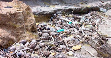 Solicitan Contenedores Basura Para Playa Chaparrales