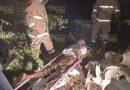 Abejas asesinas acaban con la vida de campesino de Juan Zumaya en Tuxpan