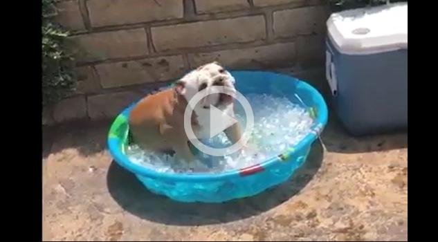 VIDEO: Para este calor se antoja algo así
