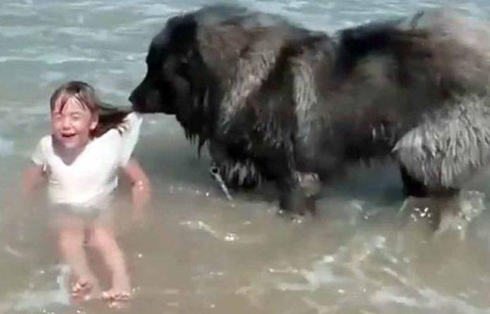 Tierno: Perro protege a niña mientras jugaba en la playa