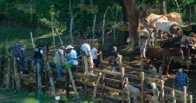 Encuentran presunto ganado robado en rancho entre Tihuatlán y Tuxpan