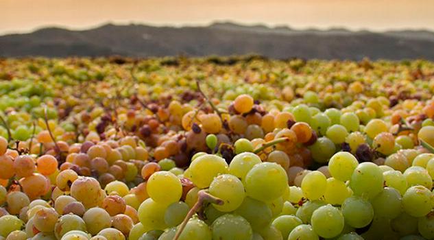 Francia Recuperará Este Año Nivel Producción Vino