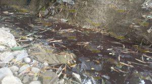 Grave Contaminación Ocasiona Rastro Tihuatlán