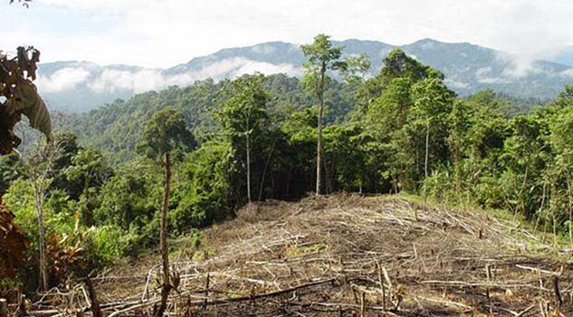 Manantiales Sierra Vías Extinción Por Deforestación