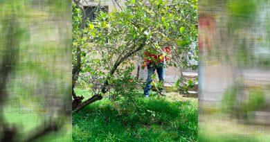 Retira Protección Civil Enjambre Vivienda Naranjos