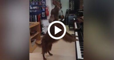 Un Perro Gran Talento