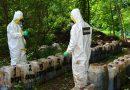 Decomiso histórico de casi 50 toneladas de crystal en Sinaloa