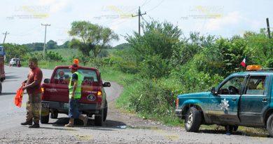 Abejas Atacan Nuevo Carretera Federal Álamo Alazán