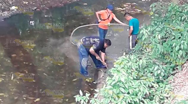 Alerta por cría lagarto en el arroyo del Ídolo