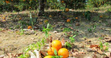 Buscan solucionar problemas de plagas agrícolas en Álamo