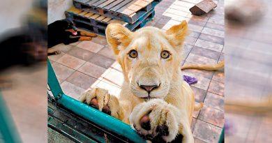 Denuncian azotea leones Ciudad México