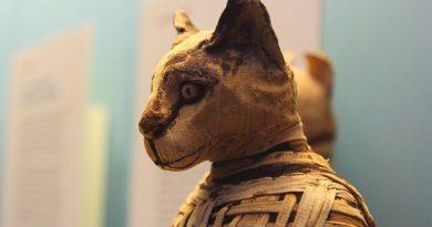 Descubren decenas de momias de gatos