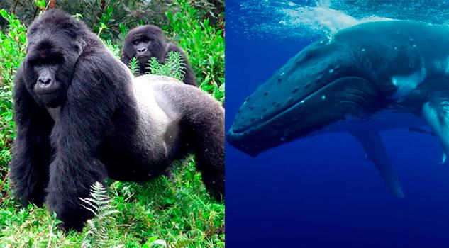 Dos especies salen de la Lista Roja de peligro de extinción