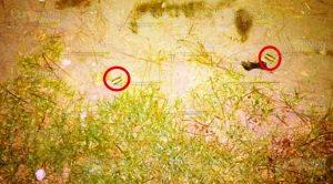 Lo ejecutan en una vereda rumbo a la comunidad Santa Ana en Jalacingo