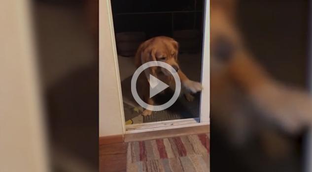 Más vale prevenir que lamentas, este can se la sabe