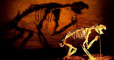 """Descubren fósil del extinto """"León Marsupial"""""""