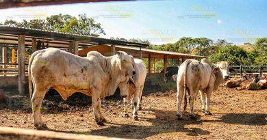 Necesaria regulación de carne en mercados de Tuxpan