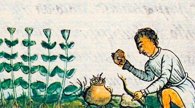 Un xochimilca escribió el primer libro de herbolaria en América