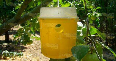 Con las lluvias las plagas incrementan en cítricos y mangos