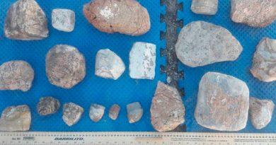 Hallan huesos fósiles de mastodonte en Chihuahua