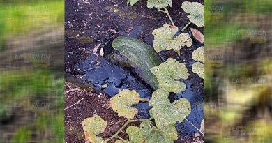 Indolencia de Pemex ante daño ambiental en Chinampa de Gorostiza