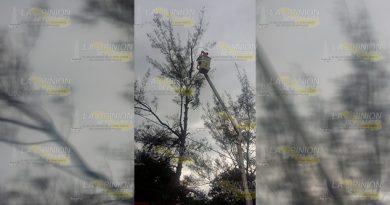 PC desrama árboles que amenazaban a jardín de niños