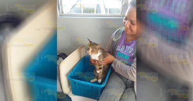 100 denuncias contra el maltrato animal en Papantla
