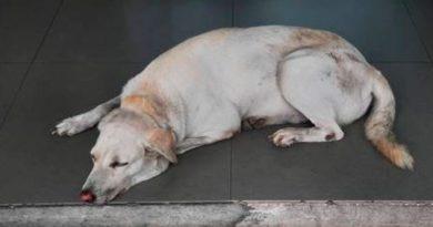 Aparecen perros envenenados en calles de Oaxaca