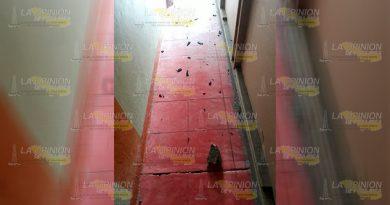 Apedrean domicilio de servidor de la nación en Coyutla
