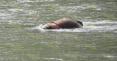 Flota cadáver en las aguas del Río Moctezuma