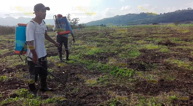 Imparable daño al medio ambiente con uso de agroquímicos