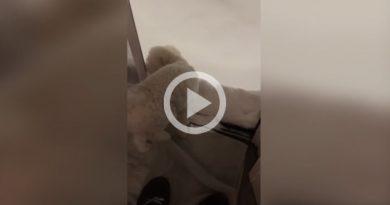 No a todos los perros les gusta pisar la nieve