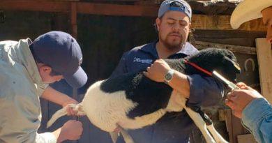 Ofrecen consultas veterinarias gratuitas en Huixquilucan