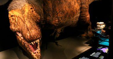 Descubren nuevos hallazgos sobre el tiranosaurio rex