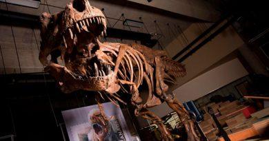 El Tiranosaurio Rex más grande jamás descubierto