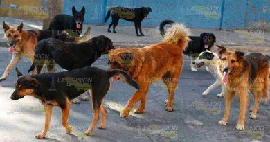 Esterilizarán mascotas en la zona conurbada de Tihuatlán