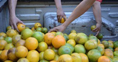 Por los suelos precio de naranja en Veracruz
