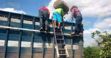 Sobreproducción citrícola en la Sierra de Puebla