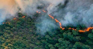 2 mil hectáreas consumidas por incendios en Veracruz